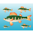 fish perch in water vector image vector image
