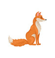 flat icon of sitting red fox side view vector image vector image