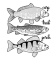 Graphic fish collection vector image vector image