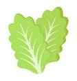 lettuce flat icon vegetable and salad leaf vector image