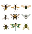 Bug icon set isolated on white vector image vector image