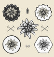 edelweiss flower alpinism vintage icon flat web vector image vector image