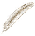 engraving of feather vector image