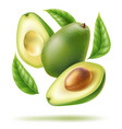 avocado leaf sliced half in motion vector image vector image