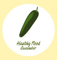 green cucumber healthy food concept vector image