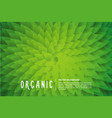 organic background with green leaf vector image vector image