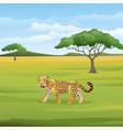 cartoon leopard in savannah vector image vector image