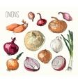Onion set vector image
