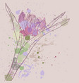 drawing tulip flower vector image vector image