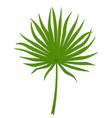 green palm leaf vector image vector image