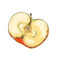 hand drawn sketch half apple in color isolated vector image vector image