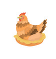 hen sitting on a nest vector image vector image