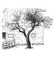 original mcintosh apple tree vintage vector image vector image