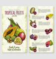 price list for exotic fresh tropical fruits vector image vector image