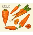 Set carrots isolated on white background vector image