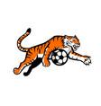 tiger jumping soccer ball mascot vector image vector image