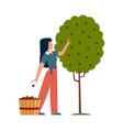 woman in garden female character harvesting vector image