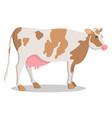 cute cow grown on farm isolated cartoon vector image
