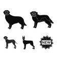 dobermandog domestic and other web icon in vector image vector image