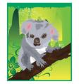 koala cartoons vector image vector image