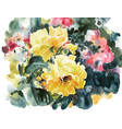 yellow roses hand painting watercolor artwork vector image vector image