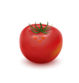 Big ripe red fresh tomato vector image vector image