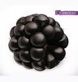 blackberry fresh fruit 3d realistic icon vector image