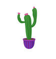 flowering cactus home plant in a flowerpot vector image