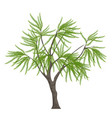 realistic elegant tree isolated on white vector image vector image
