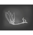 Card with magnolia flower on chalkboard vector image vector image