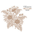echinacea flowers and leaves medical herbs set vector image vector image