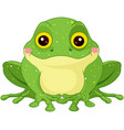 green toad vector image