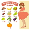 how big is my bapregnant infographic vector image