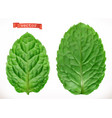 leaf of mint 3d realistic icon vector image
