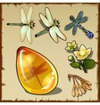 Symbols of summer plants dragonflies and amber vector image