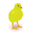 small yellow chicken on white background vector image