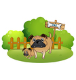 A big and a small dog near the signboard vector image