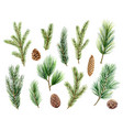 christmas set with green pine branches and vector image vector image