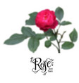 red blur rose vector image vector image