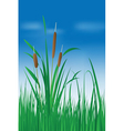 Reed plant over blue sky vector image vector image