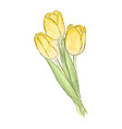 tulips hand draw of flower vector image vector image