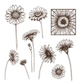 Hand drawn gerber flower set vector image vector image