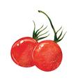Cherry Tomatoes vector image