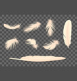 feathers transparent set vector image vector image
