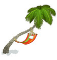 hammock on a palm tree isolated vector image