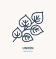 linden flat line icon medicinal plant leaves vector image vector image