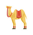 camel whit saddle and cover on the back desert vector image