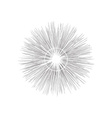 Engraving star Monochrome star burst vector image vector image