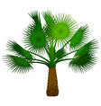 palm tree cartoon for you design vector image vector image