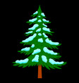 pine tree with snow in cartoon style isolated on vector image vector image